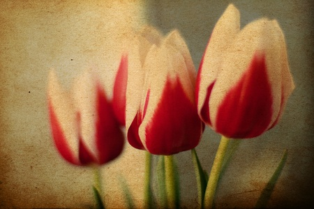 beauty spring flowers, vintage pattern Stock Photo - 9103080