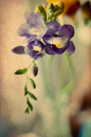 beauty spring flowers, vintage pattern photo