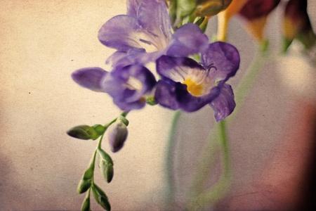 freesia: beauty spring flowers, vintage pattern Stock Photo