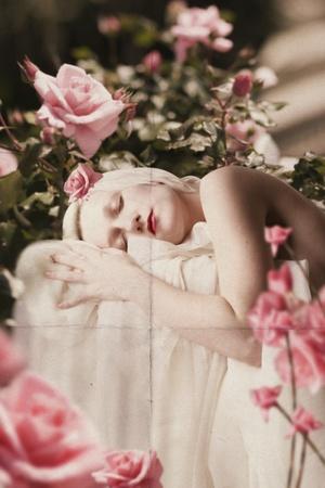 sogno: giovane donna bellezza nei rose rosa, collage di arte Archivio Fotografico