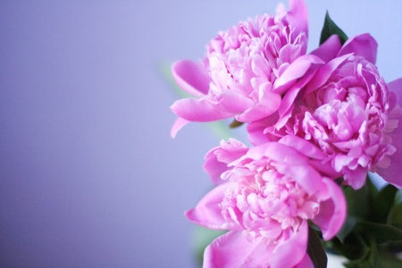 beautiful bouquet of flowers, pink peonies photo