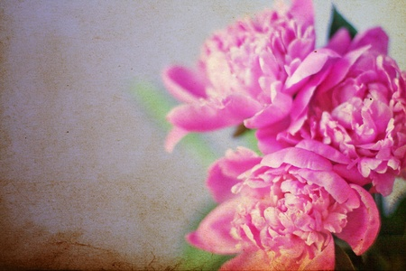 pfingstrosen: beautiful bouquet of flowers, pink peonies