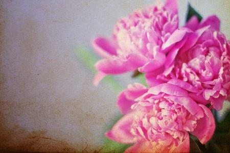 pfingstrosen: beautiful bouquet of flowers, pink peonies