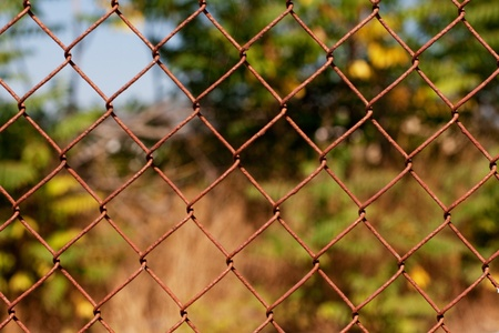 Mesh fence with green leafs Stock Photo - 10962633