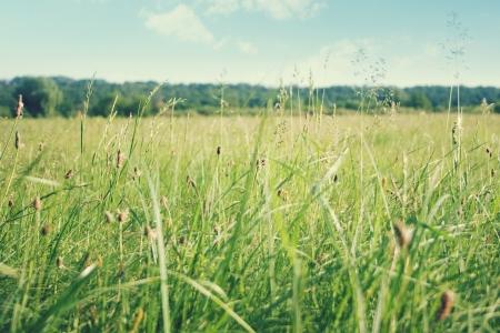 horizon over land: green grass on big field, ukraine