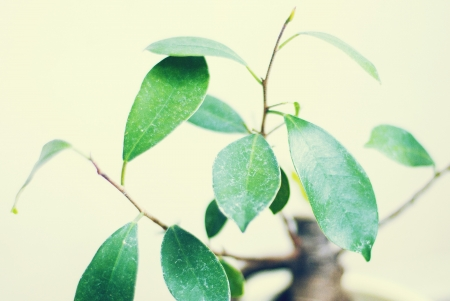 little tree with green leafs, vintage effect Stock Photo
