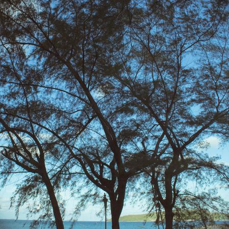 sillouette: sillouette tree