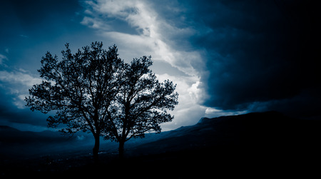 eddy: Two trees before a storm
