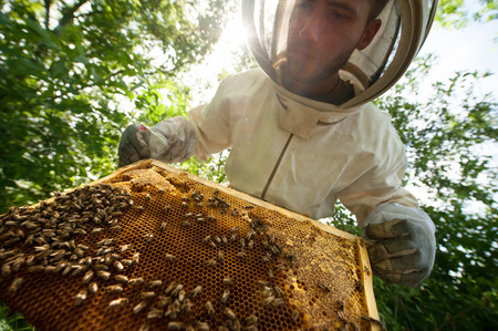 catsuit: beekeeper holding a honeycomb full of bees
