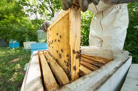 keeps: beekeeper keeps a honeycomb full of bees