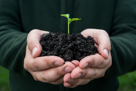 Farmer hand holding a fresh young plant