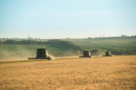 Three modern combine harvester working on a wheat crop Фото со стока