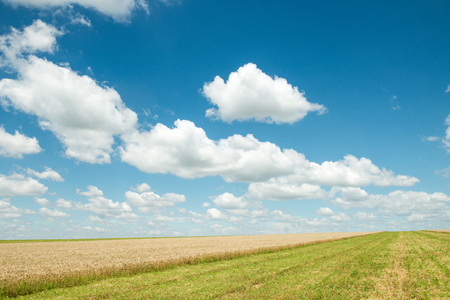 Beautiful field of wheat under the blue sky Stock Photo