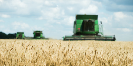 Three modern combine harvester working on a wheat crop Stock Photo