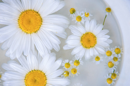 Chamomile flower on the water surface, background Stock Photo