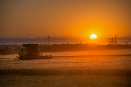 Combine harvester working on a wheat crop at sunset Stock Photo