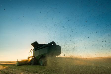 Ne-Erntemaschine, die an einer Weizenernte bei Sonnenuntergang arbeitet