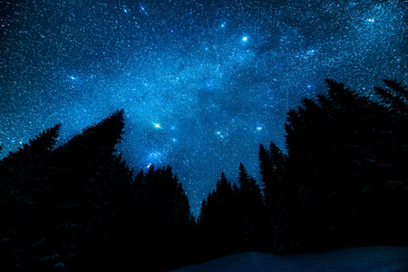bright sky: The bright starry sky in the night forest