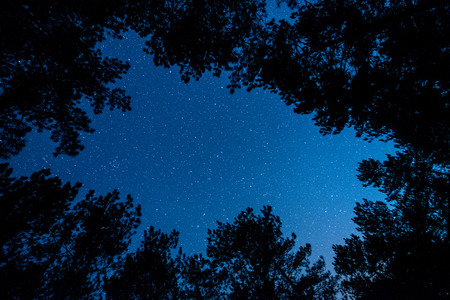 The bright starry sky in the night forest