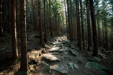 Scenic stone road in a mountain dark forest lit by the sun Banco de Imagens