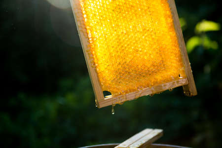 Honeycomb with honey beautifully glowing in the sunlight closeup Reklamní fotografie