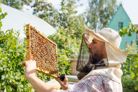 beekeeper holding a honeycomb full of bees closeup
