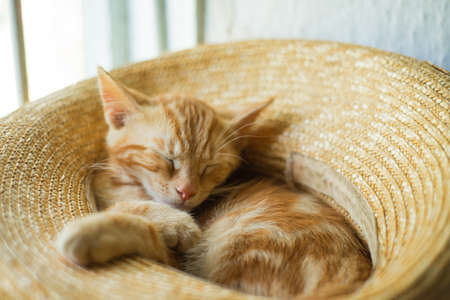 Little cute ginger kitten sleeps in a straw hat
