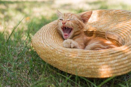 Little cute ginger kitten yawns in a straw hat