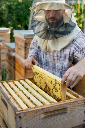 beekeeper holding a honeycomb full of bees
