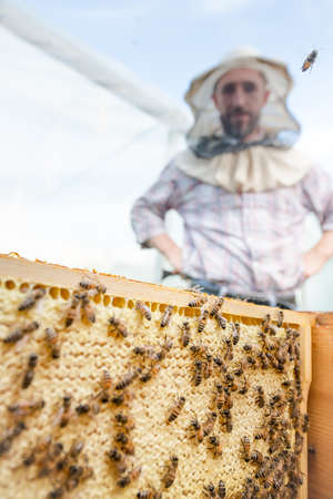 beekeeper and a honeycomb full of bees in an apiary closeup