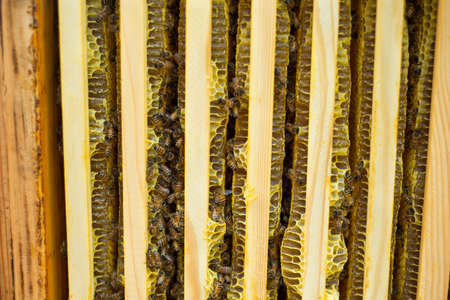 Beehive with frames full of bees closeup Standard-Bild