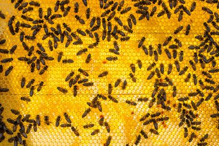 honeycomb full of bees closeup