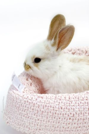 Sweet  rabbit in  hat Stock Photo - 3688392