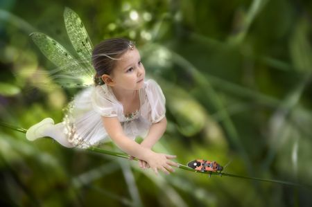 fairy wings: Fairy on the grass