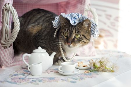 Sweet domestic cat Stock Photo