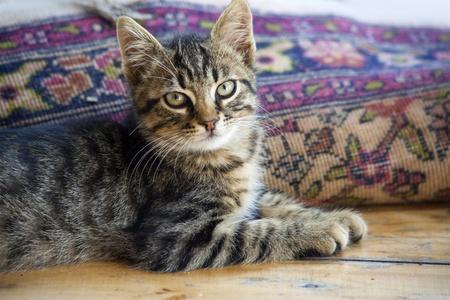 Sweet little baby cat