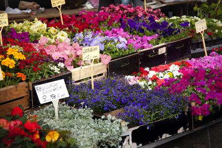 Flower open market in France