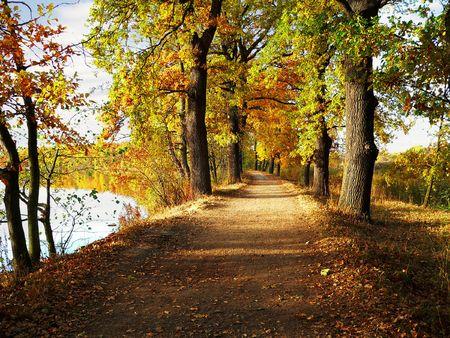 pfad:  Herbst Spaziergang in den Teich unter den gr�nen B�umen Lizenzfreie Bilder