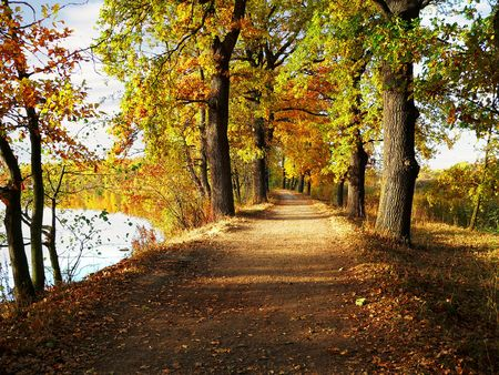 forest path:  pleasant autumn walk in the pond among the leafy trees