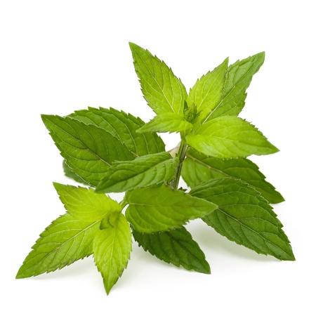 mint leaves isolated on white Standard-Bild