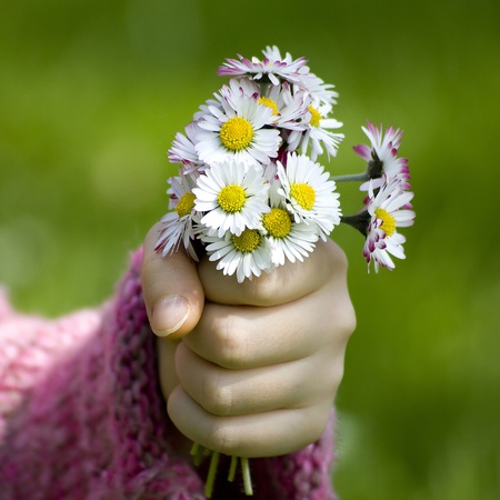 daisies - a gift for the mother