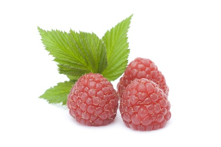 raspberries on white background photo