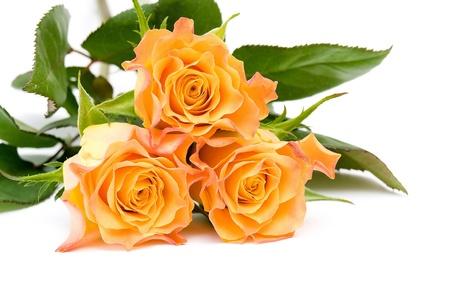 three tea roses Stock Photo - 12706406