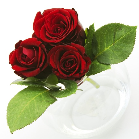 red roses Stock Photo - 12706141