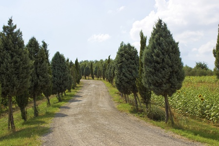 Cypress Alley leading to the farmer's house in Tuscany Stock Photo - 12887537