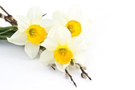 pussy yellow: easter decoration - narcissus flowers