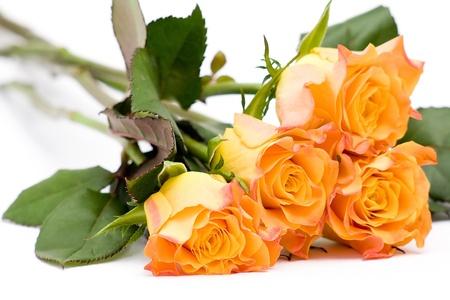 tea roses Stock Photo - 13033413