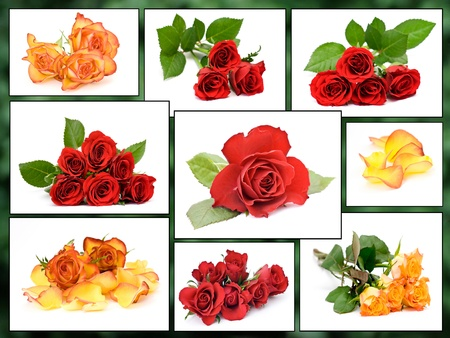 collage of roses Stock Photo - 13069512