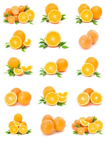 collection of citrus on a white background photo