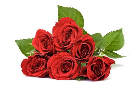 red roses Stock Photo - 13069454